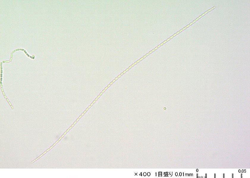 Amba0768c